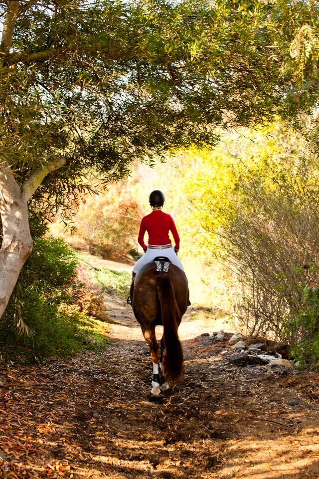 RockTape Equestrian